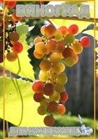 Виноград для новичков |Сборник